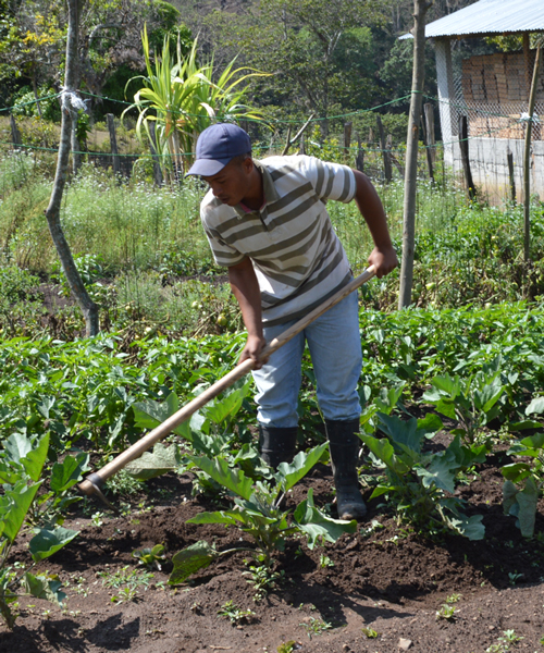 Local farmer from Hondo Valle cultivating produce at our Base Camp